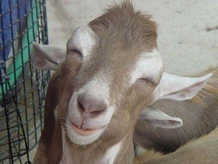 Photos drôles où touchante de toute animaux autres que les ânes ! D1557d4f
